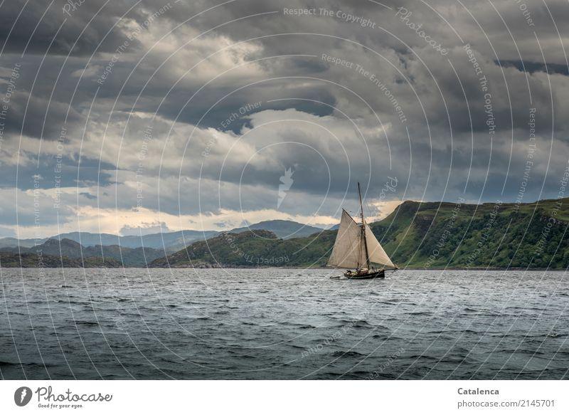 Firth of Lorn Himmel Natur Ferien & Urlaub & Reisen Sommer grün Wasser Meer Wolken Berge u. Gebirge Leben Küste Bewegung grau Schwimmen & Baden Stimmung rosa