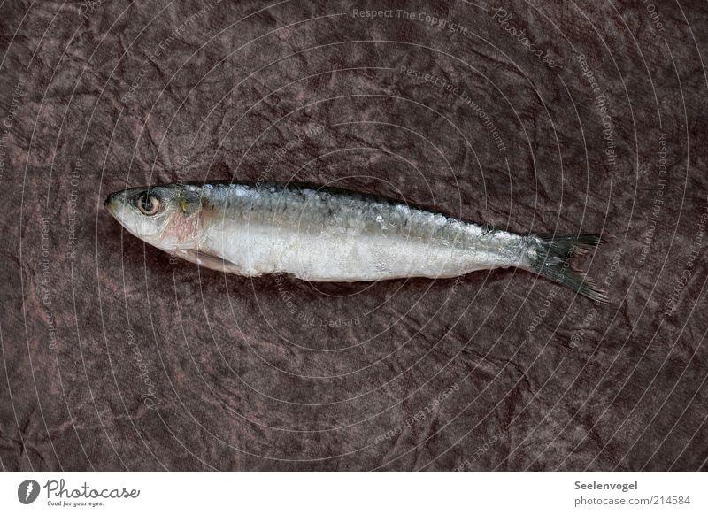 Sardine Lebensmittel Fisch Ernährung glänzend schleimig rosa schwarz silber Tod Gedeckte Farben Innenaufnahme Menschenleer Schatten Vogelperspektive Tierporträt