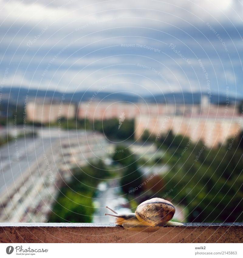 Weltenbummler Häusliches Leben Umwelt Tier Himmel Wolken Horizont Schönes Wetter Baum Bautzen Lausitz Deutschland Kleinstadt Stadtrand bevölkert Haus Plattenbau