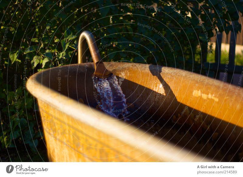 Sonntag = Badetag schön Körperpflege ruhig Schwimmen & Baden Stahl Rost Wasser kalt gelb gold ungemütlich Quelle Wärme einladend Badewanne Wasserhahn Abendsonne