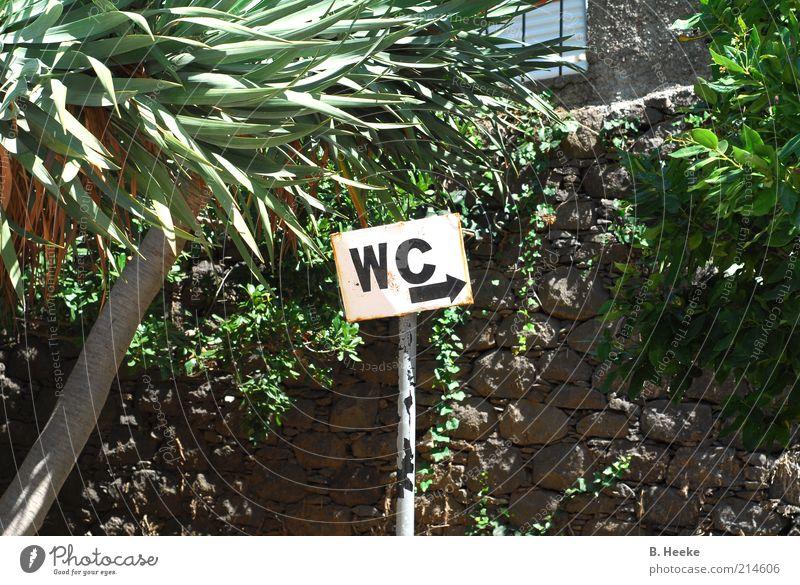 WC Ausflug Sommer Schilder & Markierungen Farbfoto Außenaufnahme Tag Pfeil Wegweiser Menschenleer Pflanze exotisch Toilette rechts Mauer
