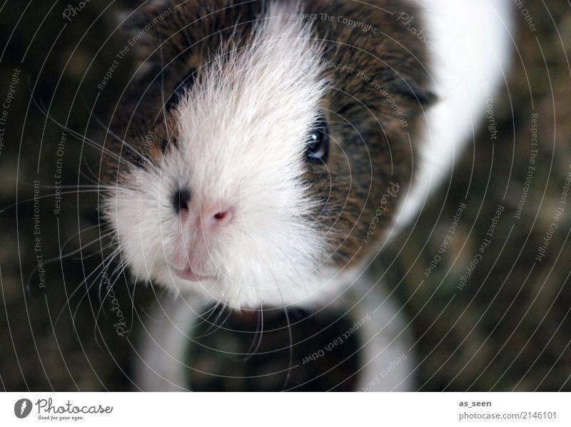 Einmal Gurke bitte weiß Tier Tierjunges Gefühle natürlich klein braun Kindheit authentisch niedlich Neugier Nase Haustier Fell Partnerschaft Appetit & Hunger