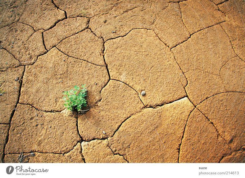 Grüner Punkt Natur grün Pflanze Einsamkeit Landschaft Umwelt braun Kraft Erde Klima Wachstum Zukunft Urelemente trist Hoffnung Wüste