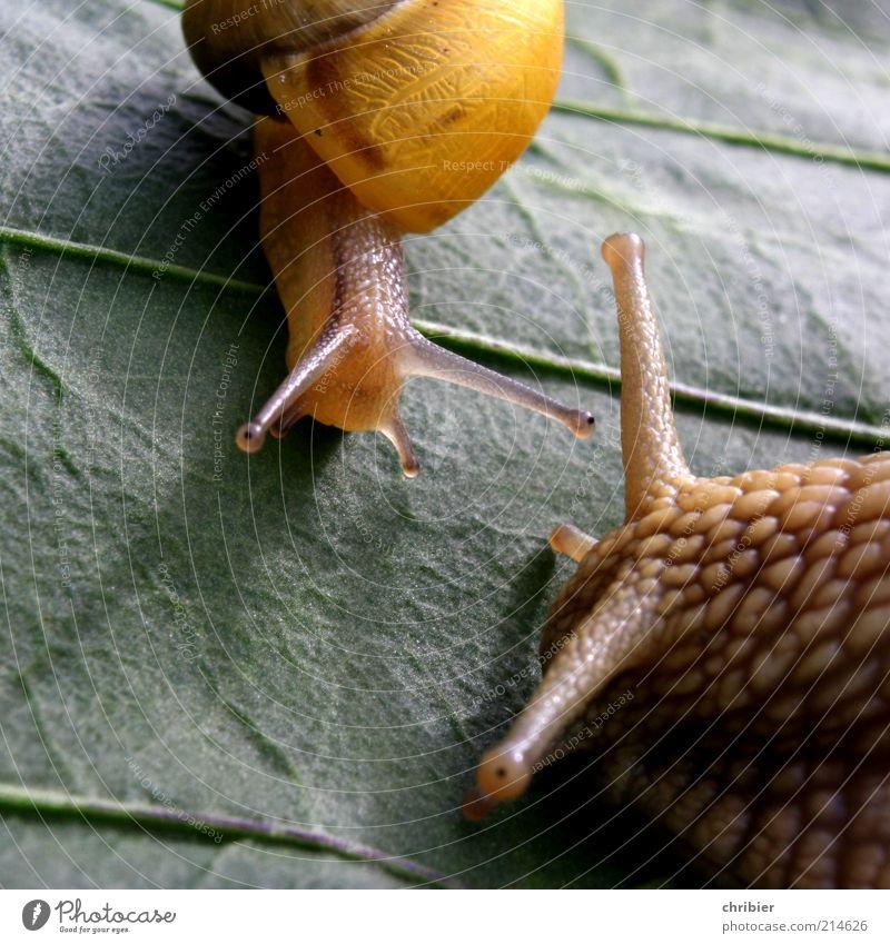 Ich schau dir in die Augen, Kleines! Natur grün Blatt Tier gelb sprechen klein Tierjunges braun groß niedlich Kommunizieren Neugier nah Vertrauen Beratung