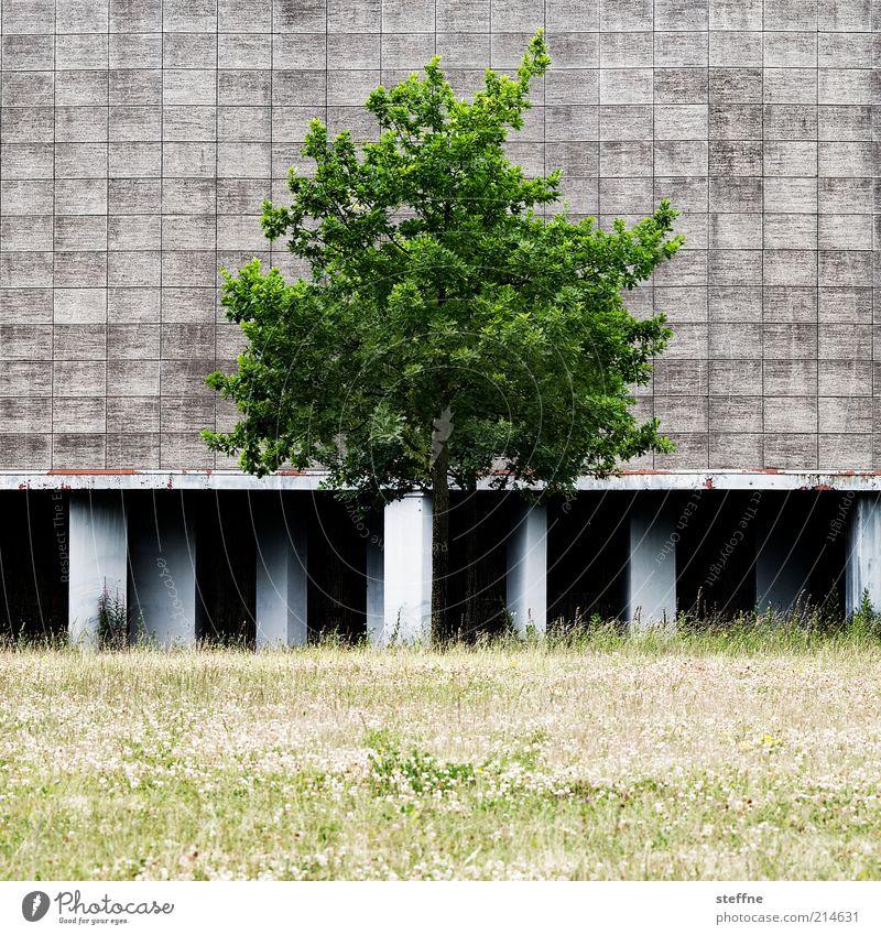 [H10.1] zivilisierte Natur Baum Sommer ruhig Wiese Gras Umwelt Fassade trist natürlich Schönes Wetter Säule Industrieanlage Strebe Pflanze