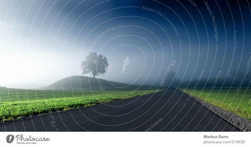 Nebel Natur Baum grün blau Straße dunkel kalt Wiese Herbst Gras grau träumen Landschaft Luft Stimmung