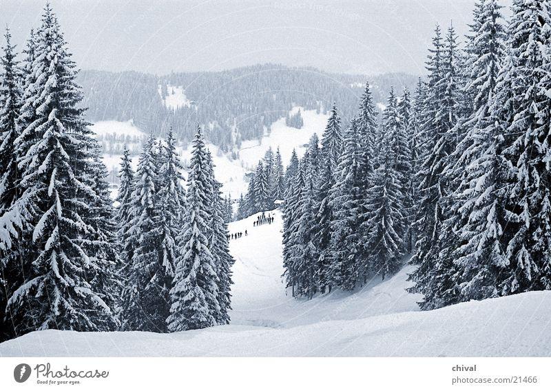 Skikurs Tanne Fichte Ferien & Urlaub & Reisen Wolken Berge u. Gebirge Schnee Alpen Skipiste Schneelandschaft Winterwald Außenaufnahme Idylle traumhaft Farbfoto