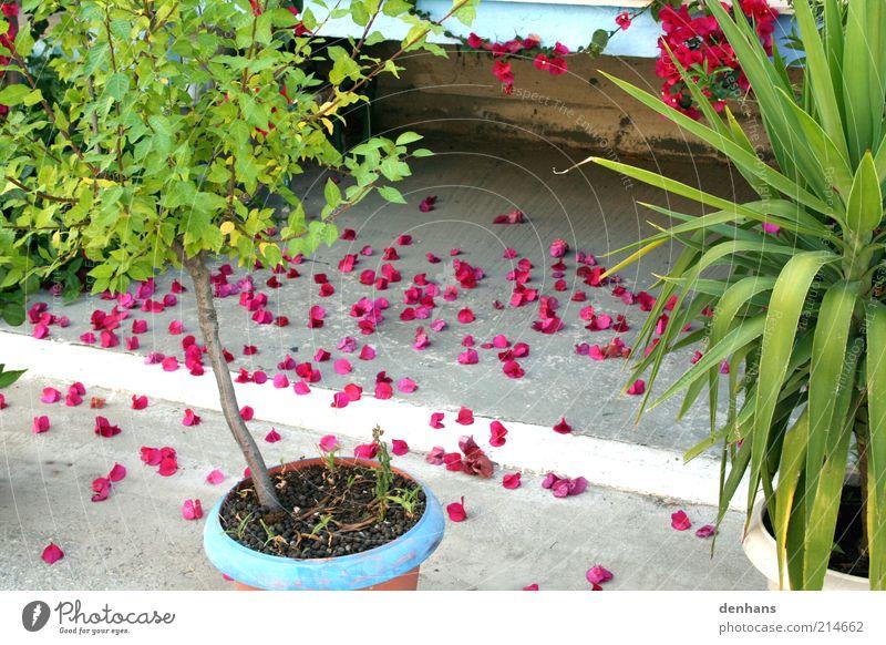 schönes Ende blau grün schön Ferien & Urlaub & Reisen Pflanze Sommer Blume Blatt ruhig Leben Garten Blüte Stein Zufriedenheit natürlich Treppe