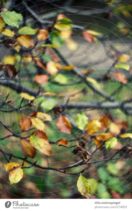herbstelt so schön. Umwelt Natur Herbst Baum Blatt verblüht natürlich mehrfarbig Farbe Vergänglichkeit Jahreszeiten Buche Buchenblatt färben Unschärfe