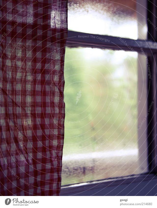 Teehaus Pflanze Baum Fenster Vorhang Gardine Glas kalt grün rot weiß Schutz Geborgenheit Warmherzigkeit ruhig beschlagen Kondenswasser Stoff Stoffmuster