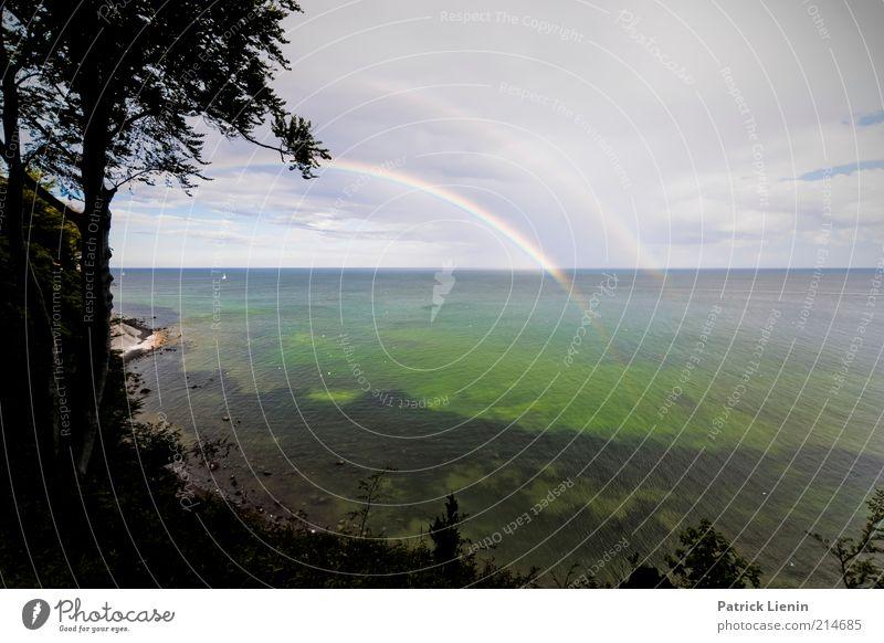 raining in paradise Natur schön Himmel Baum Meer Pflanze Sommer Ferien & Urlaub & Reisen Wolken Ferne Farbe Erholung träumen Regen Landschaft Küste