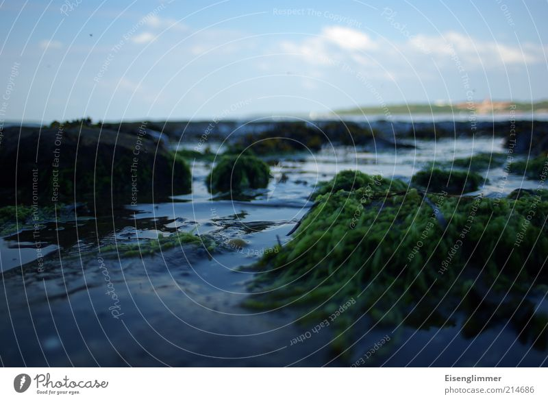 Krabbenblick Himmel blau Pflanze Sommer dunkel kalt Stein Landschaft Küste Umwelt nass Felsen Bucht Ekel Ostsee Glätte