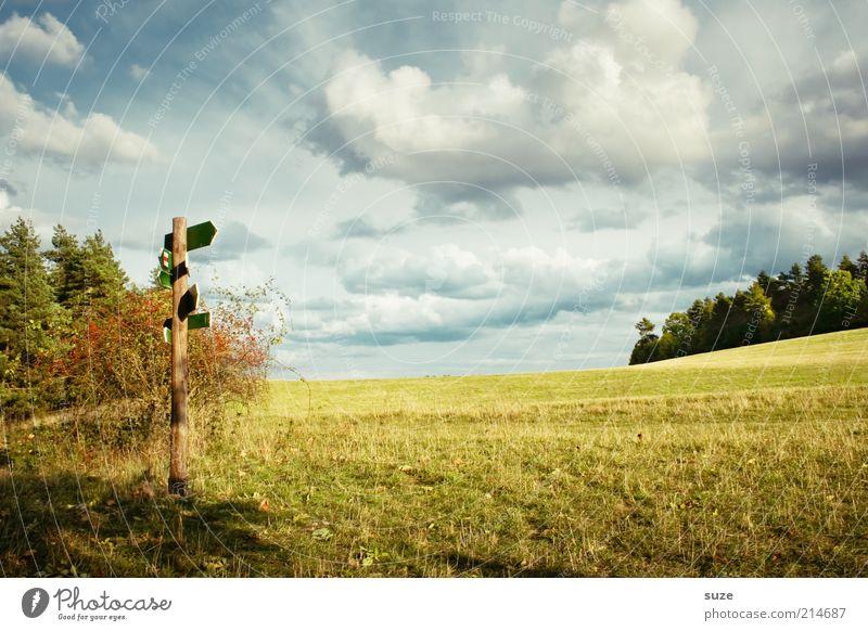 Somma! Natur Himmel Baum Wald Wiese Wege & Pfade Landschaft Feld Umwelt Schilder & Markierungen Zukunft Pfeil Richtung Hinweisschild Schönes Wetter Wegweiser