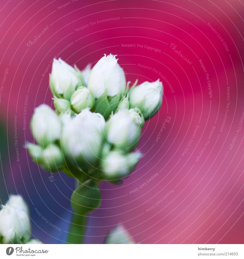 bloomberg Lifestyle Stil harmonisch Wohlgefühl Zufriedenheit Sinnesorgane Erholung ruhig Kur Spa Umwelt Natur Pflanze Frühling Sommer Blume Kitsch Farbfoto