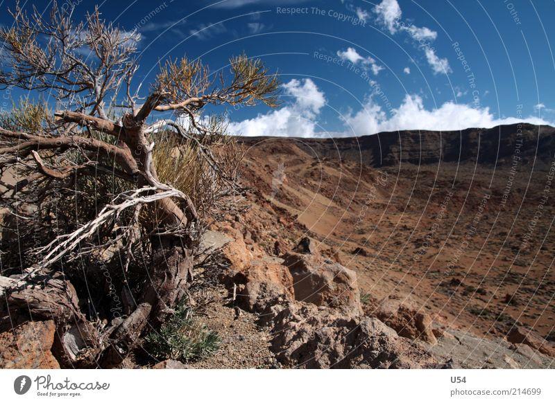 Fast wie im wilden Westen Landschaft Himmel Baum Felsen Vulkan Teneriffa Farbfoto Außenaufnahme Tag Reisefotografie Menschenleer braun