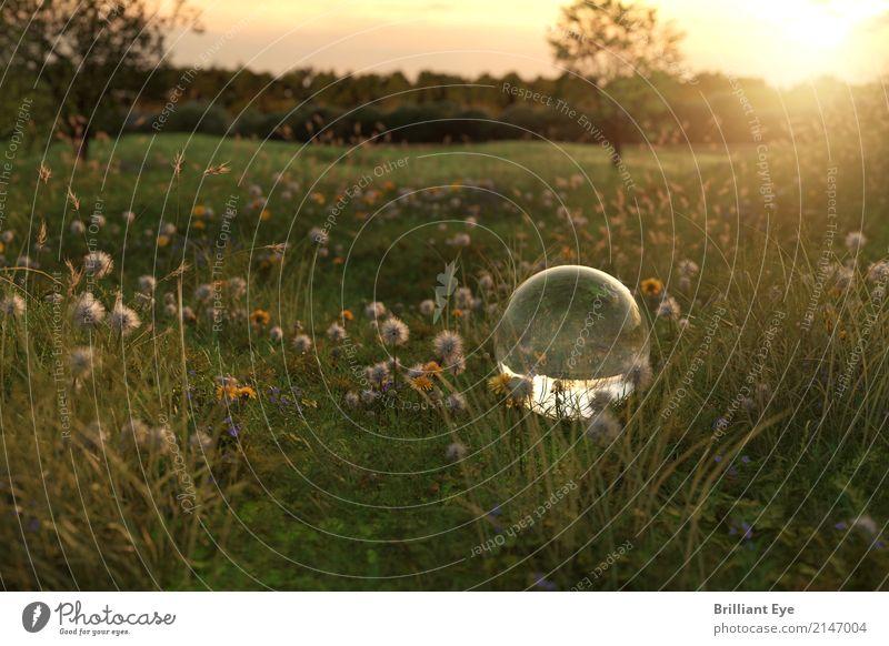 Sommerliche Idylle Sommerurlaub Sonne Garten Natur Landschaft Pflanze Sonnenaufgang Sonnenuntergang Sonnenlicht Blume Gras Wiese Glas Globus natürlich positiv