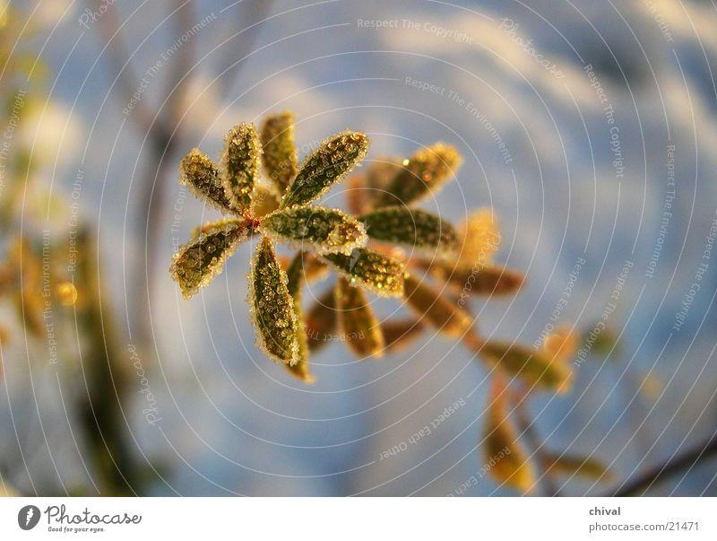 Eingezuckert Pflanze Winter Blatt kalt Schnee Eis Frost gefroren Raureif