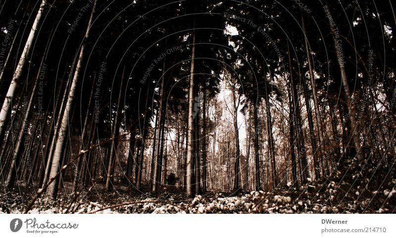 Winterwald Freiheit Umwelt Natur Landschaft Pflanze Urelemente schlechtes Wetter Eis Frost Schnee Baum Wald dunkel nass braun Nadelwald Licht Farbfoto