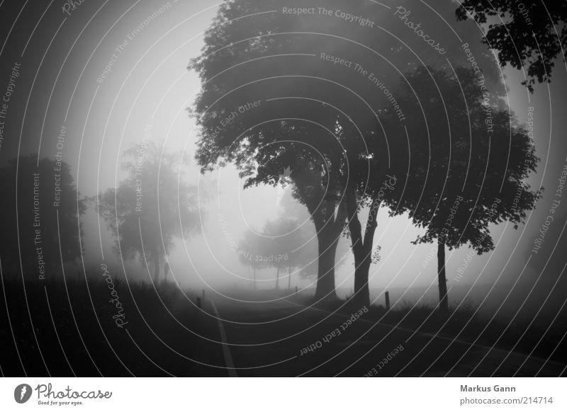 Nebel Natur Landschaft Luft Herbst Wetter schlechtes Wetter Wiese Wald Straße grau schwarz weiß Trauer Tod Deutschland Baum Landstraße gefährlich