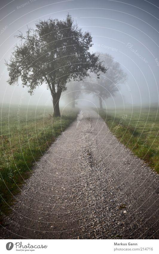 Feldweg Natur Luft Herbst Wetter schlechtes Wetter Nebel Wiese Stimmung träumen Trauer Deutschland Fußweg Gras grün Baum Wege & Pfade Kies Schotterweg grau