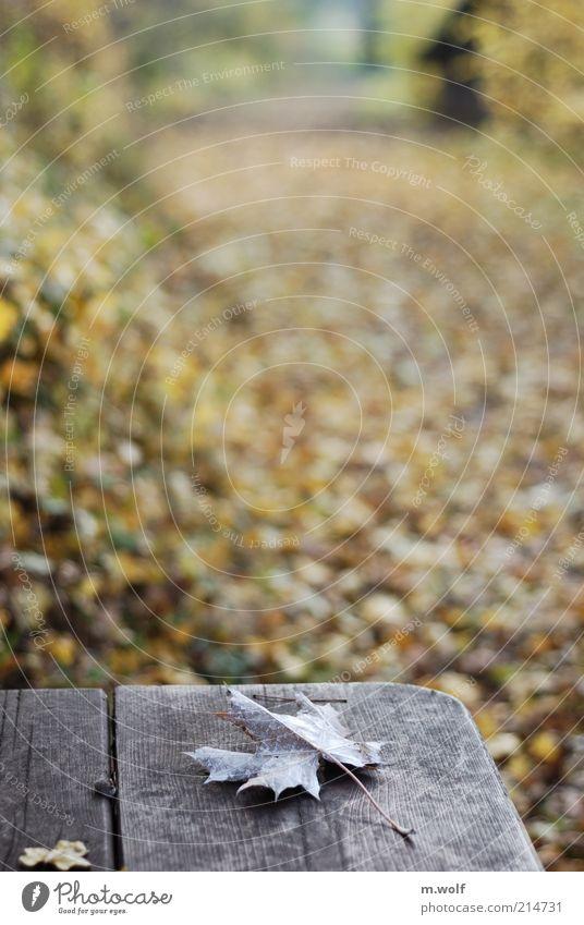 FALLout Natur alt Baum Pflanze Blatt Einsamkeit Wald kalt Herbst Stil Traurigkeit Wege & Pfade Park Landschaft Stimmung braun
