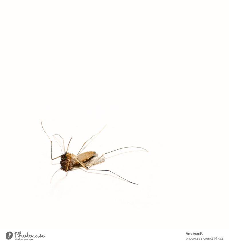 Erwischt! Umwelt Natur Tier Totes Tier Fliege Flügel Stechmücke 1 fliegen Tod Totschlag erschlagen Insekt Insektenschutz insektizide stechen Stachel Farbfoto