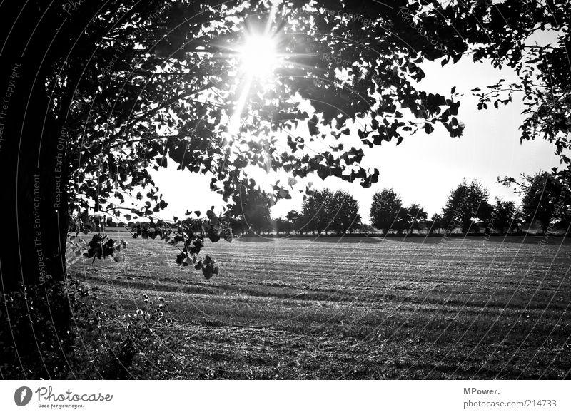 SchwarzWeiß Ausflug Sommer Sommerurlaub Natur Baum Feld Kreativität Silhouette Stoppelfeld Sonnenstrahlen Schwarzweißfoto Außenaufnahme Menschenleer Abend