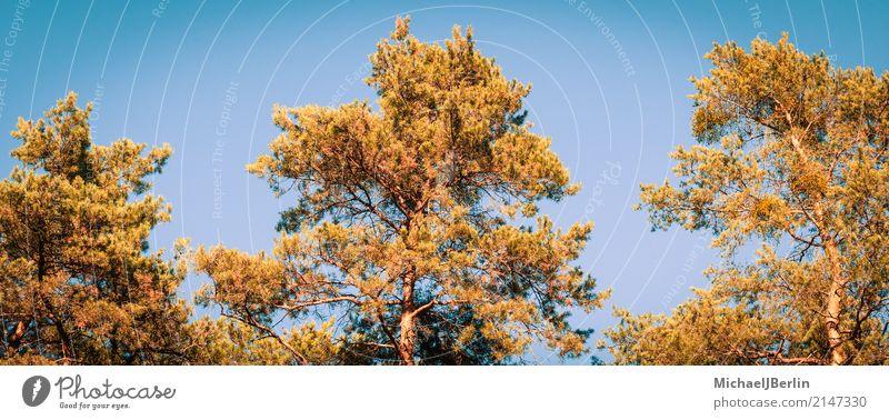 Herbstliche Farben im Wald Natur Pflanze Baum Umwelt orange Top Image Grünpflanze