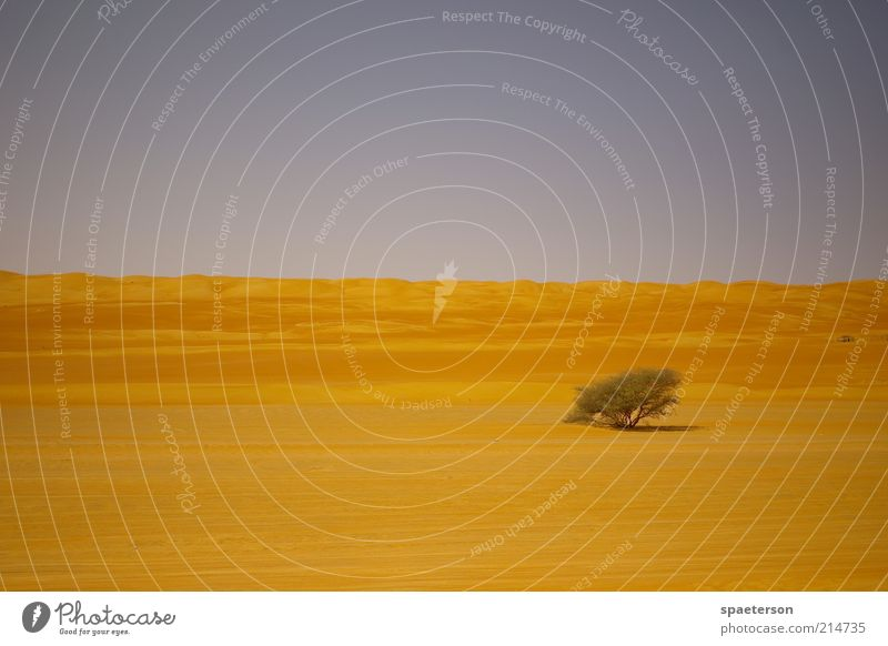 wüstenbaum Baum blau Sommer ruhig Einsamkeit Ferne Freiheit Wärme Sand Landschaft Umwelt gold Horizont Wachstum Sträucher Klima