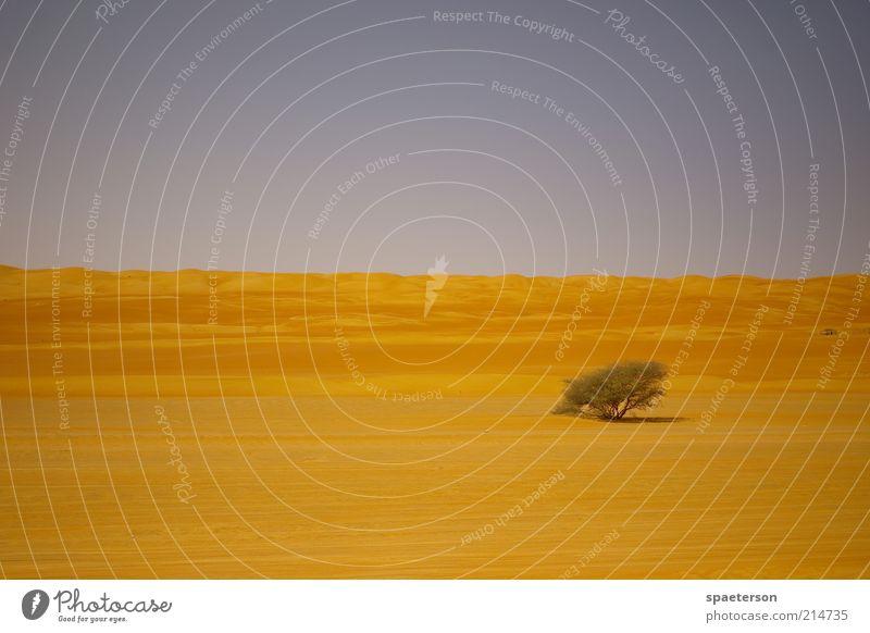 wüstenbaum Freiheit Expedition Umwelt Landschaft Sand Wolkenloser Himmel Sommer Schönes Wetter Wärme Baum Sträucher Wüste Menschenleer leuchten Wachstum trocken