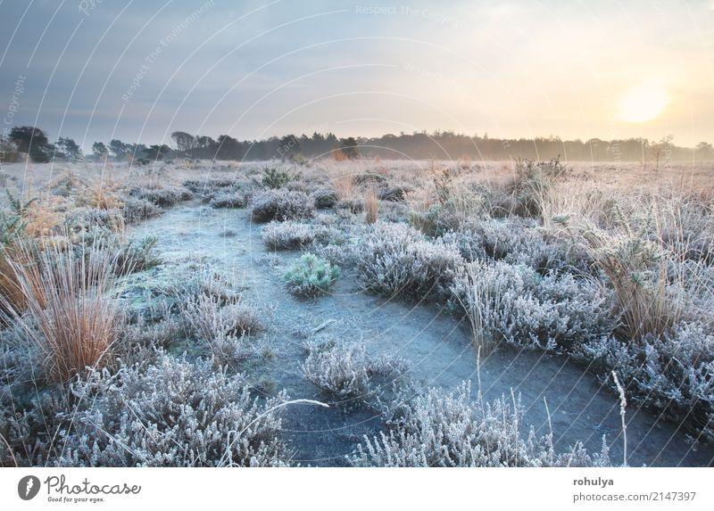 bereifter Weg bei Sonnenaufgang im Herbst Natur Landschaft Himmel Horizont Nebel Eis Frost Schnee Blume Wiese Feld Straße Wege & Pfade weiß kalt fallen gefroren