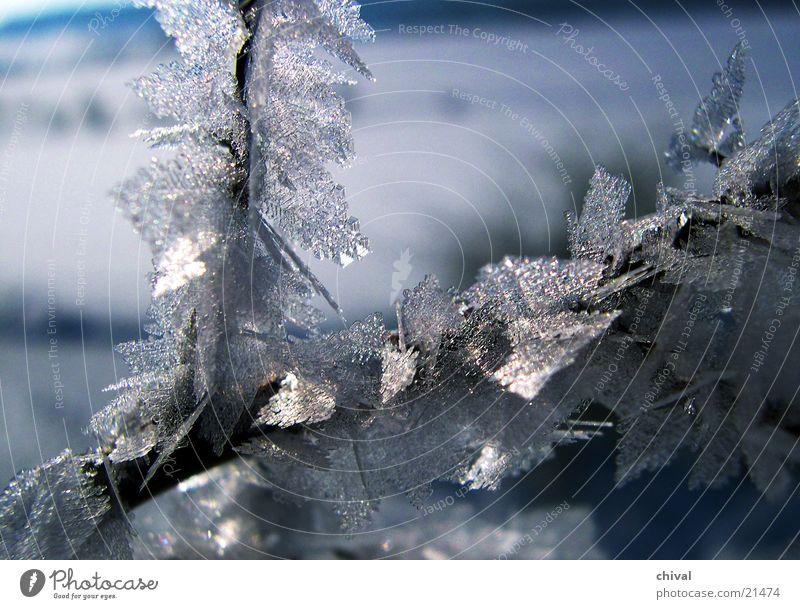 Eisnadeln Winter kalt Schnee Wachstum gefroren frieren Kristallstrukturen Raureif Reifezeit