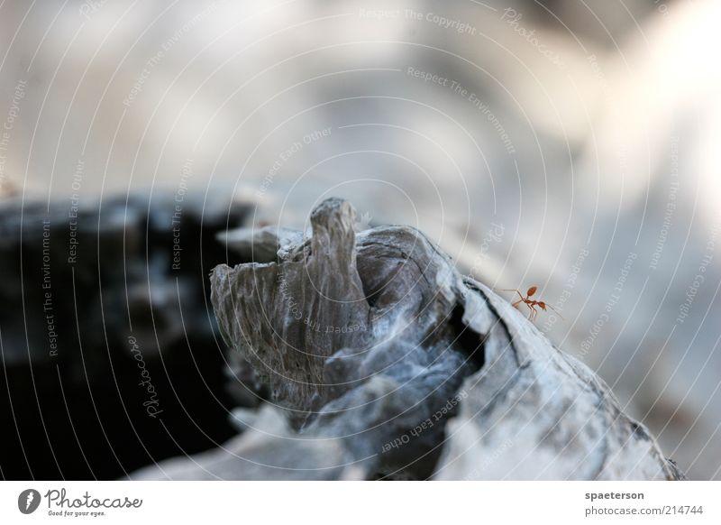 Ameise an Baum Natur Sommer Tier schwarz Holz braun Erde fliegen Klima Wildtier Stechmücke