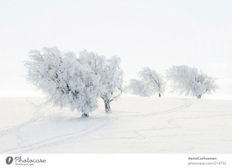 es wird langsam Zeit ! weiß Baum Winter Ferien & Urlaub & Reisen Schnee Landschaft Eis hell Frost Tourismus Klima Spuren Hügel Schneelandschaft Schwarzwald