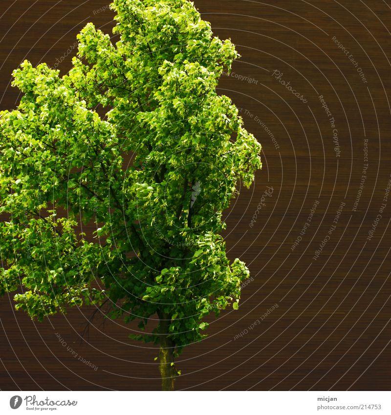 Fractal |They love that wall Landschaft Baum frisch Gesundheit hell natürlich positiv Wärme braun grün Zufriedenheit Einsamkeit Leben Klimawandel Holz Wand