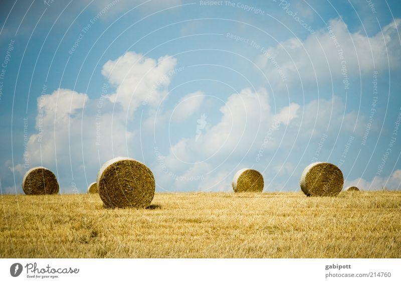 Sushi Umwelt Natur Landschaft Pflanze Erde Himmel Wolken Sommer Schönes Wetter Nutzpflanze Heuballen Feld positiv blau gelb Landwirtschaft Gedeckte Farben