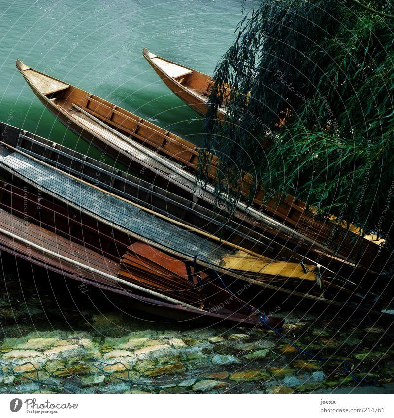 Stocherkahn Flussufer Bootsfahrt Ruderboot alt Tübingen Neckar Flachboot Farbfoto mehrfarbig Außenaufnahme Schatten Kontrast Trauerweide Baum Zweige u. Äste