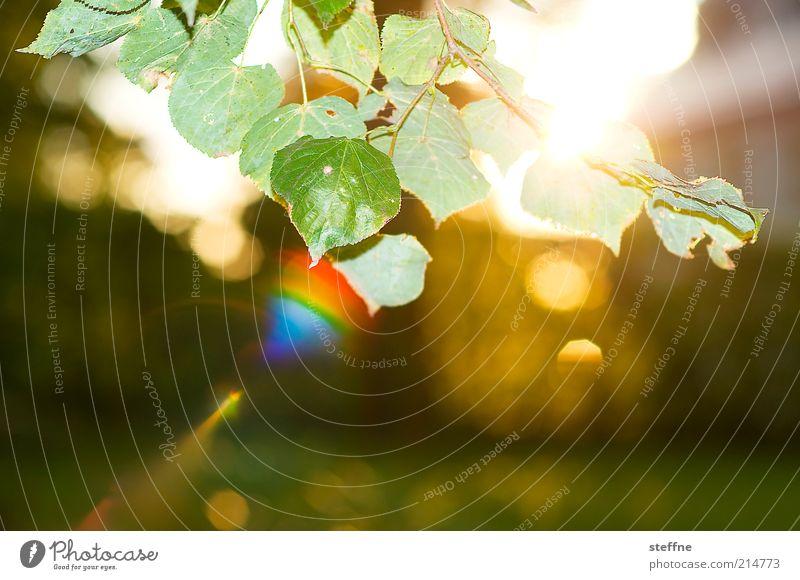 Güldener Herbst Natur schön Pflanze Blatt Umwelt Schönes Wetter Sonnenaufgang Blendenfleck Sonnenuntergang regenbogenfarben