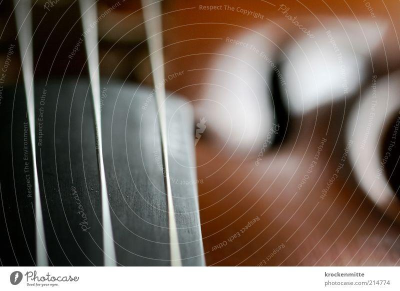 allererste Geige Musik Holz glänzend elegant Schwache Tiefenschärfe harmonisch Klang Musikinstrument Geige Saite schwingen Maserung Klassik klassisch Unschärfe Detailaufnahme