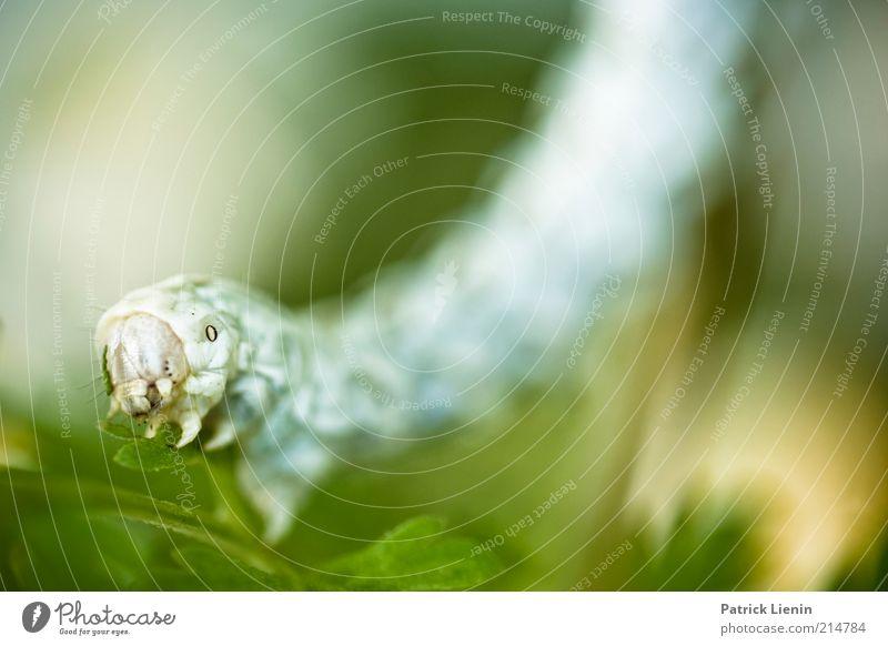 kleines Monster Umwelt Natur Pflanze Tier Sommer Blume Blatt Grünpflanze Nutztier Wildtier Tiergesicht 1 Blick Raupe lang Ungeheuer schrecklich Fressen nützlich