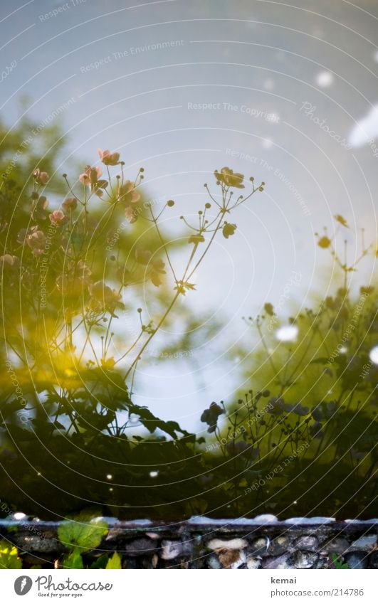 Im Brunnen Natur Wasser schön Blume Pflanze Sommer Blatt Blüte Stein Umwelt Wachstum Fluss Sträucher Warmherzigkeit Blühend