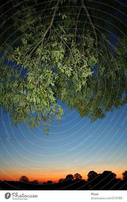 Dschungelfeeling Baum grün Sommer Wald Schönes Wetter Zweige u. Äste Sonnenuntergang Farbenwelt