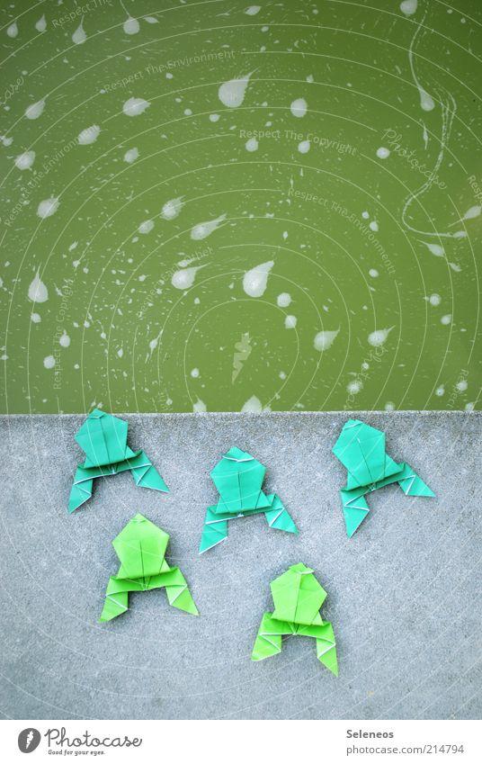 Froschperspektive Freizeit & Hobby Basteln Origami Teich See Tier Tiergruppe Stein Spielen nass Papier Wasser Farbfoto Außenaufnahme Menschenleer