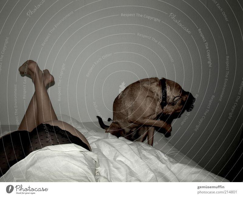 nicht hinsehen Haut Erholung Bett Schlafzimmer feminin Unterwäsche Hund Pfote 1 Tier beobachten Bewegung hocken Blick authentisch natürlich Neugier dünn schön