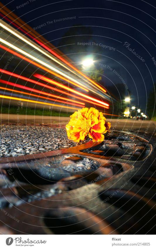 streetview Sommer Blüte Kleinstadt Straßenverkehr außergewöhnlich Lichtspiel Gully Farbfoto Außenaufnahme Nacht Blitzlichtaufnahme Langzeitbelichtung