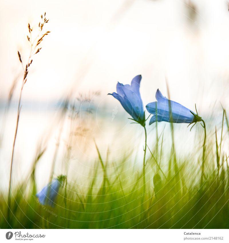 Der Sonne entgegen Himmel Natur Pflanze blau Sommer grün Blume Leben Umwelt Blüte Wiese Gras Stimmung orange Design Wachstum