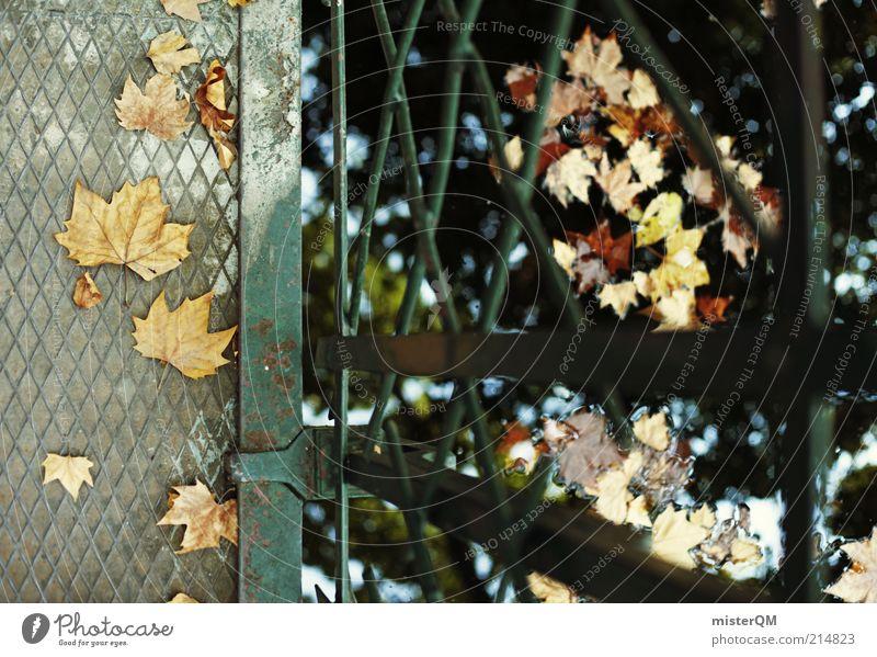 Herbstliche Gefilde. Natur Wasser Blatt Einsamkeit Traurigkeit See Zufriedenheit Umwelt Zeit Brücke ästhetisch Spaziergang fallen Jahreszeiten Steg