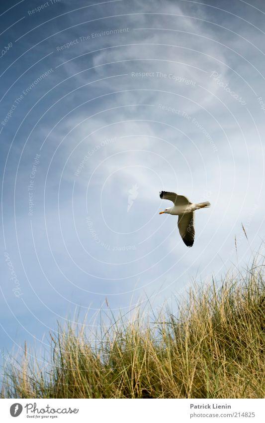 Beached Natur schön Himmel Meer Pflanze Sommer Strand Ferien & Urlaub & Reisen Wolken Tier Erholung Gras Landschaft Vogel Küste Wind