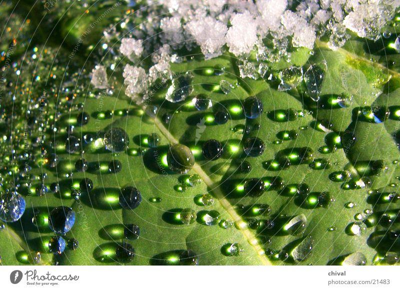 Schneetropfen Wasser Sonne Wassertropfen Seil Kugel Linse Bruch Schneeschmelze