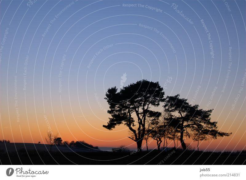 After sunset Natur Himmel Baum blau rot Winter ruhig Erholung Landschaft Zufriedenheit Horizont ästhetisch Frieden Sehnsucht Idylle Schönes Wetter